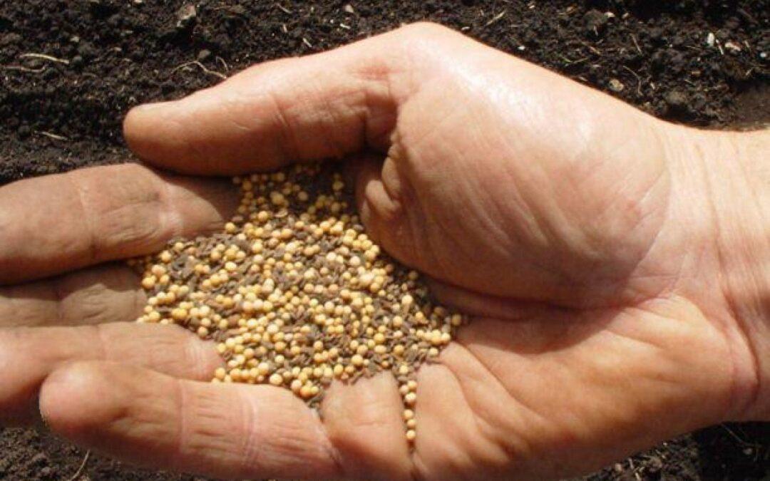 «El reino de Dios se parece a un hombre que echa semilla en la tierra»